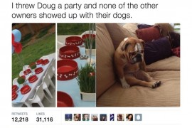 "Dog's ""Birthday Party"" Gone Awry"