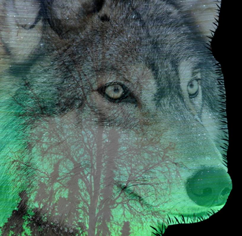 Howl Chronicles Deadline